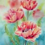 Stunning poppies