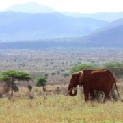 Tsavo National Park