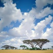 Wonderful Kenya