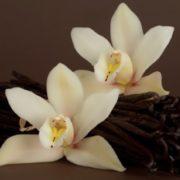 Wonderful Vanilla