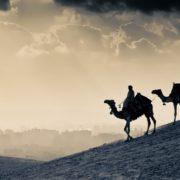 Wonderful camels
