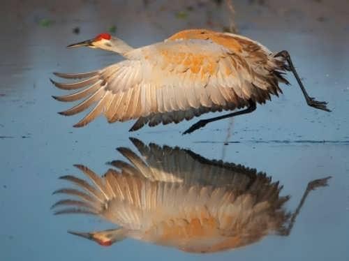 Wonderful crane
