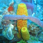 Colorful sponges