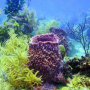 Purple sponge