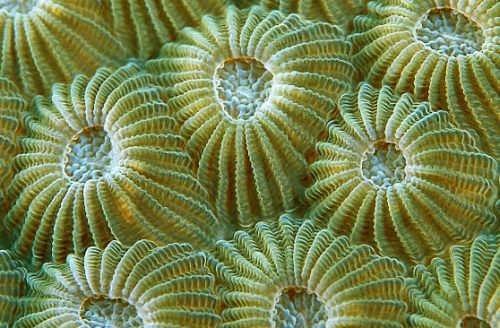 Attractive sponges