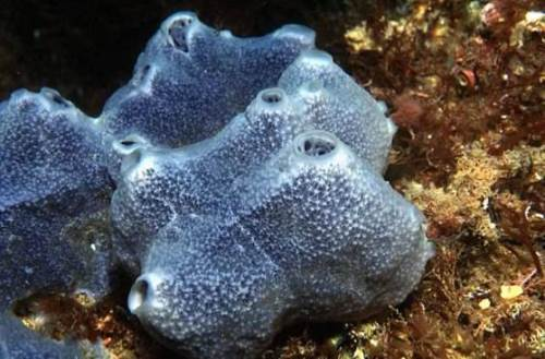 Interesting sponges