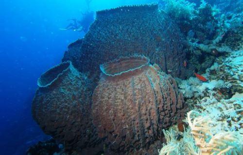 Wonderful sponges