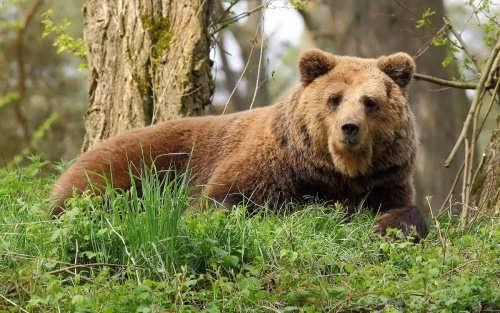 Amazing bear