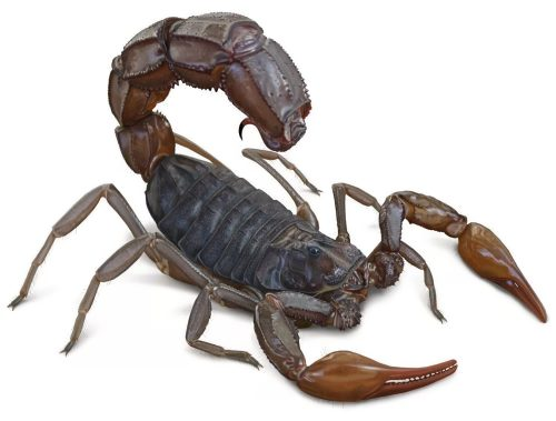 Amazing scorpion