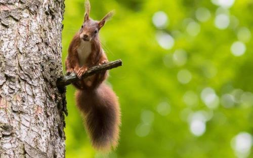Amazing squirrel