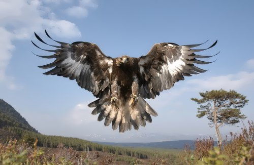 Attractive eagle