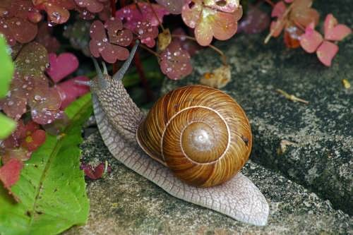 Attractive snail