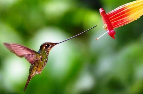 Awesome hummingbird