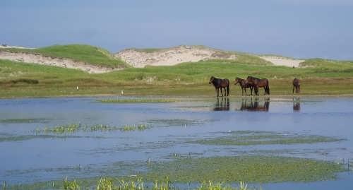 Beautiful Sable Island
