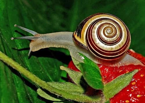 Beautiful snail
