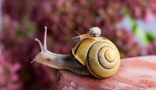 Charming snails