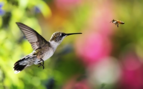 Cute hummingbird