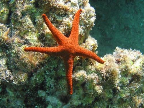 Cute starfish