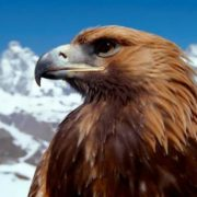 Gorgeous eagle