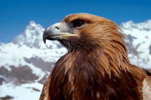 Gorgeous eagle