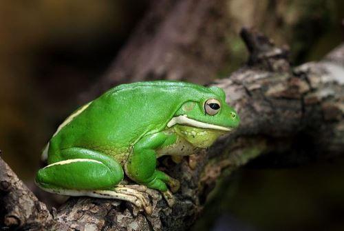 Gorgeous frog