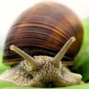 Gorgeous snail