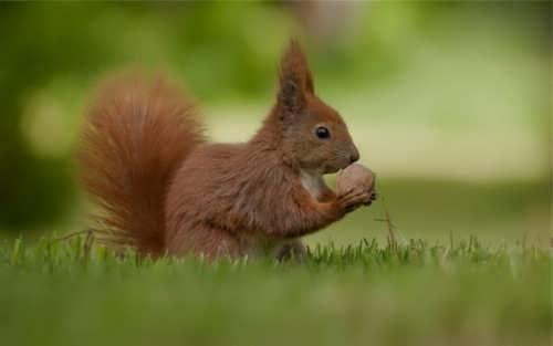 Graceful squirrel