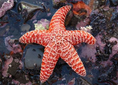 Graceful starfish