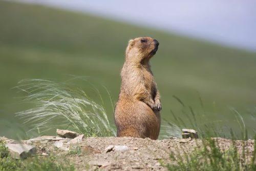 I am sitting, I am waiting, I am meditating