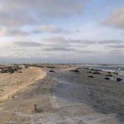 Interesting Sable Island