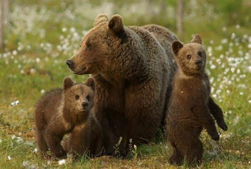 Interesting bears