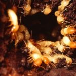 Interesting facts about termites