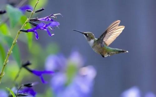 Interesting hummingbird