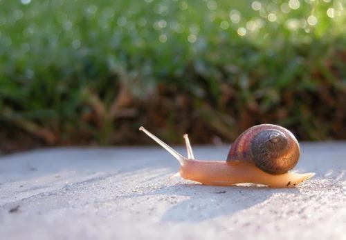Interesting snail