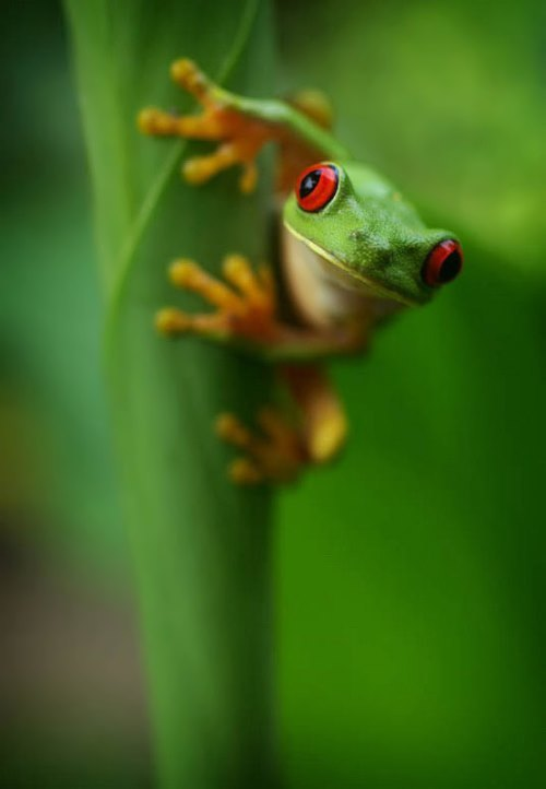 Lovely frog
