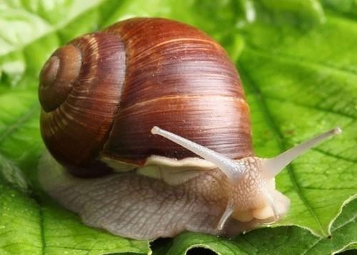 Lovely snail
