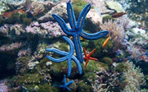 Lovely starfish