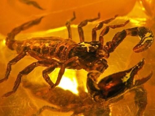 Pretty scorpion