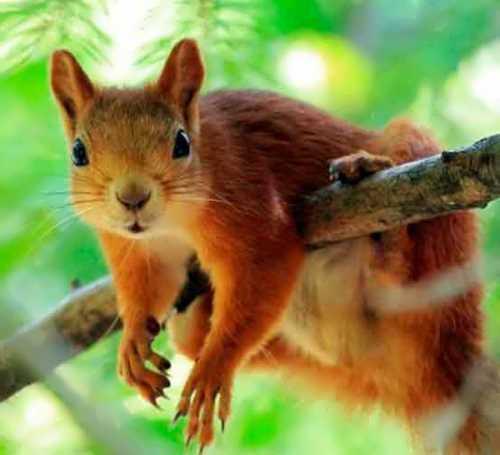 Pretty squirrel