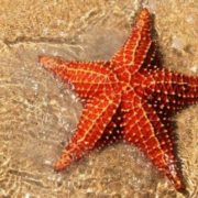 Pretty starfish