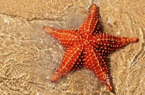 Pretty starfish