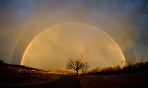 Rainbow over the tree