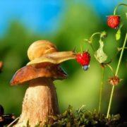 Snail on a sunny day