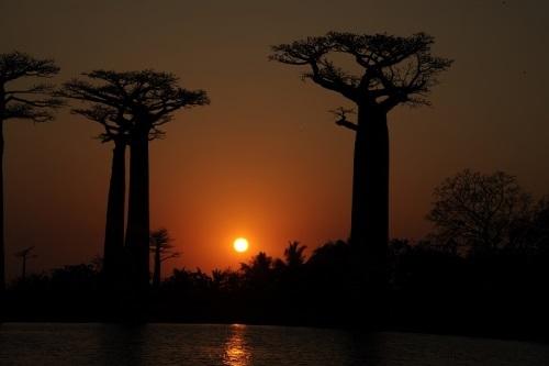 Stunning baobabs