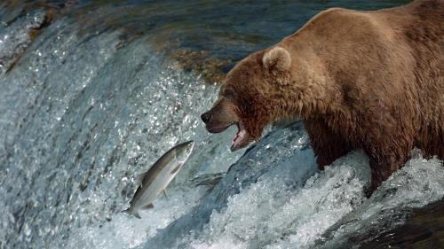 Stunning bear