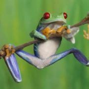 Stunning frog