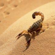 Stunning scorpion