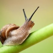 Stunning snail