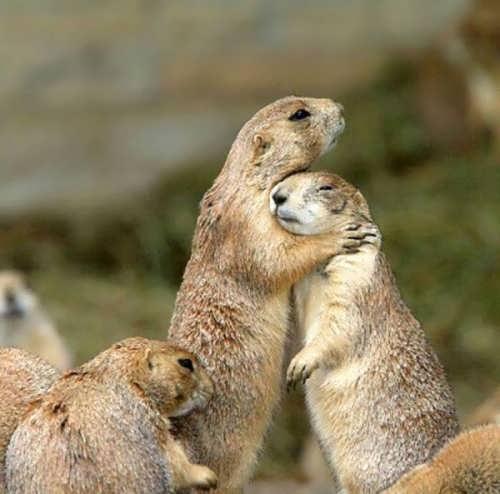 Tender hugs