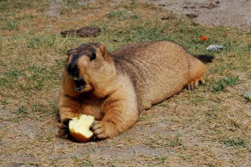 This apple is mine